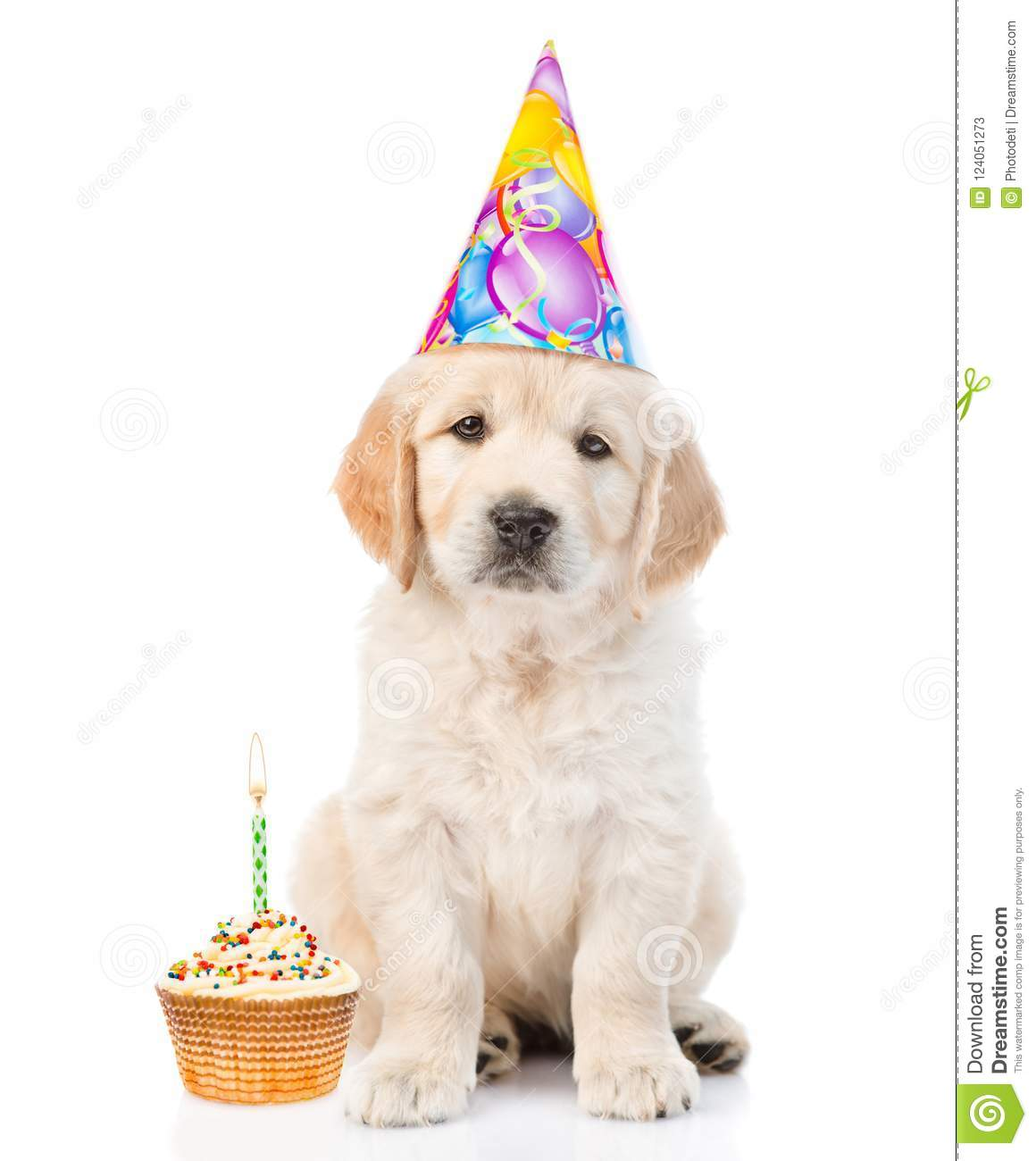 Peachy Golden Retriever Puppy In Birthday Hat With Cake Looking At Camera Funny Birthday Cards Online Fluifree Goldxyz