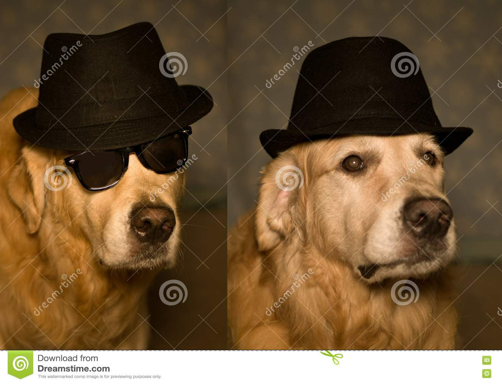 Golden Retriever Puppy Stock Photo Image Of Cute Golden 74469418
