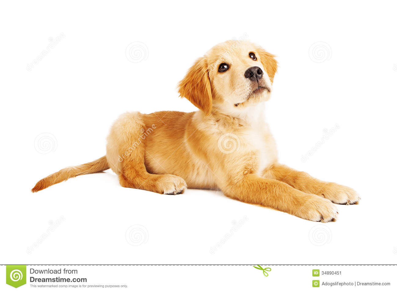golden retriever puppy laying side view stock image image 34890451. Black Bedroom Furniture Sets. Home Design Ideas