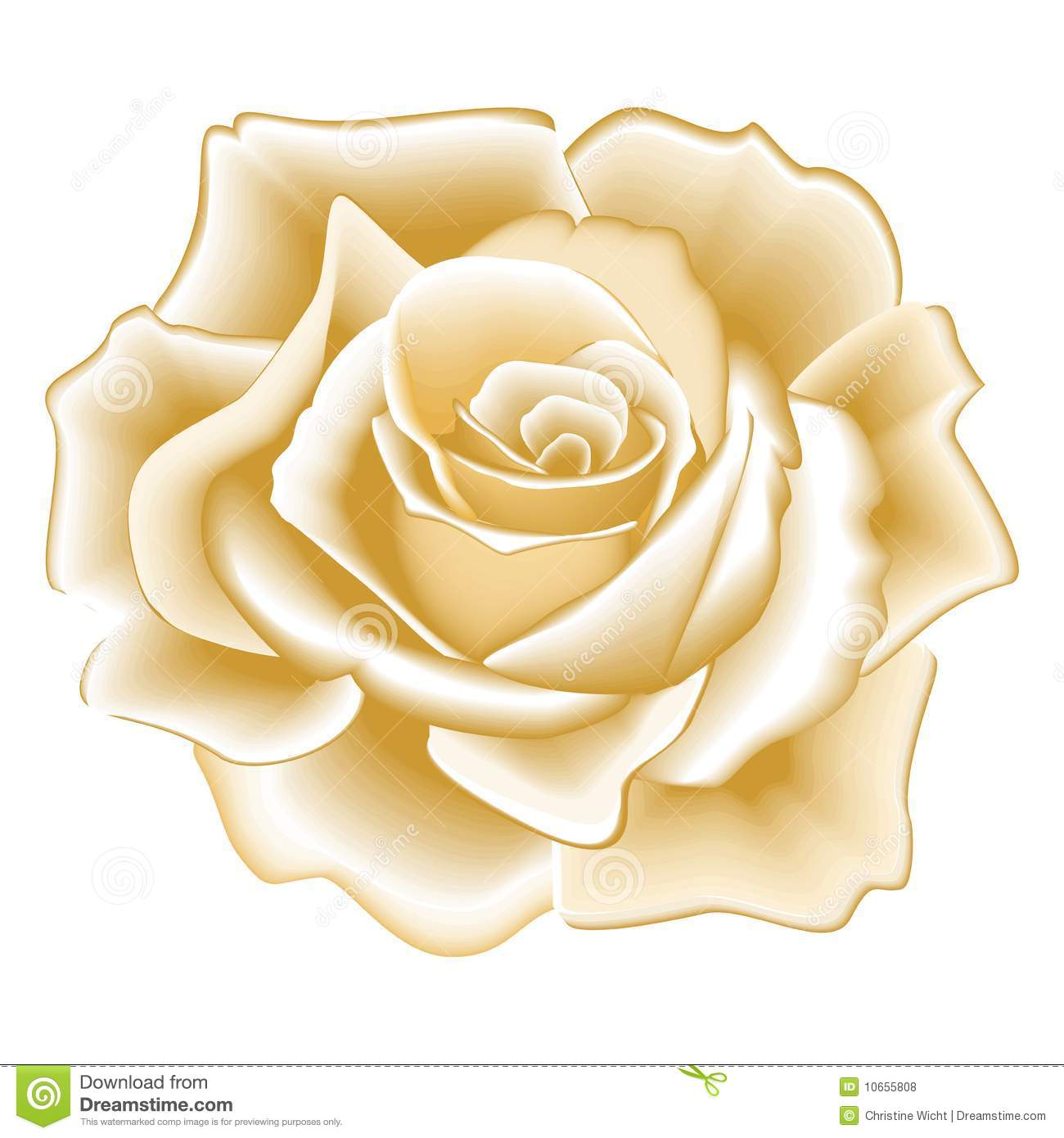 Golden Rose Royalty Free Stock Photos Image 10655808
