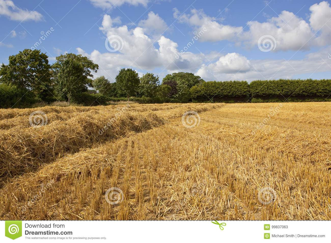 Golden Straw Field And Woodland Stock Image Image Of