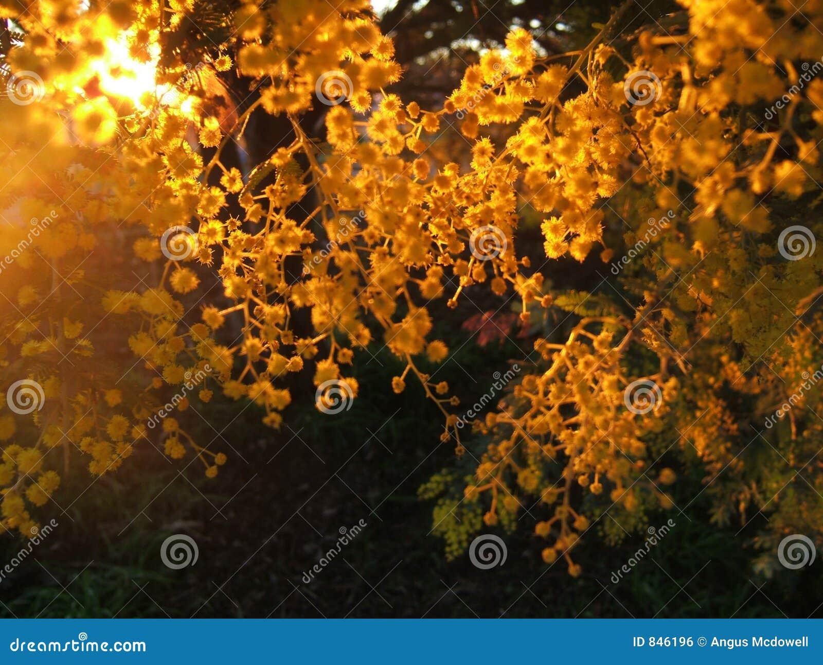 The golden Sun