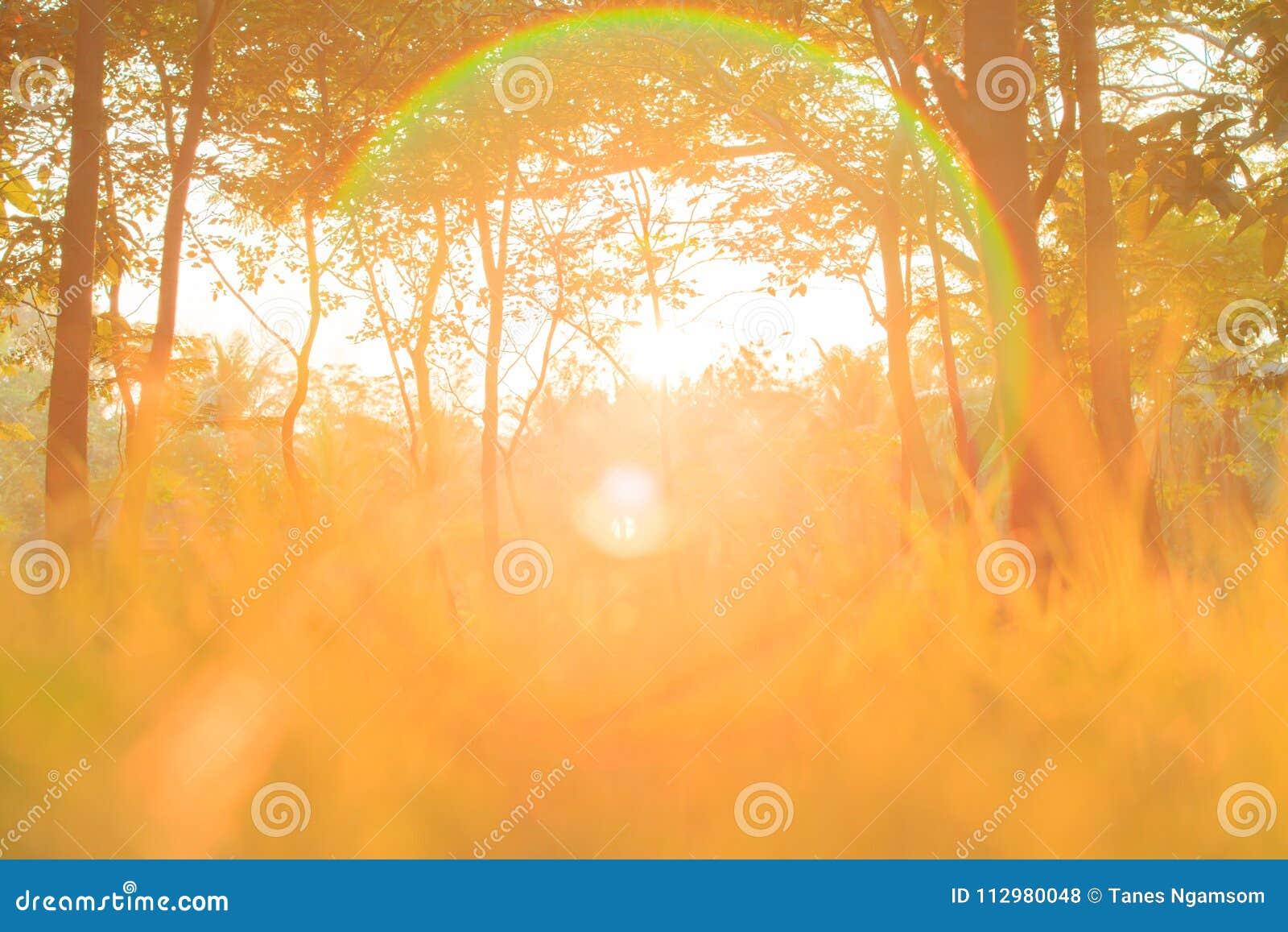 Golden sunrise shines down around the tree and grassland.