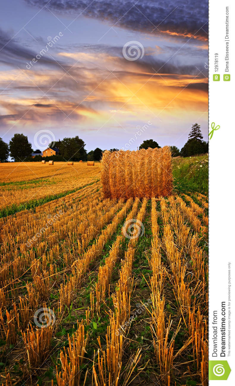 Golden Sunset Over Farm Field Stock Image