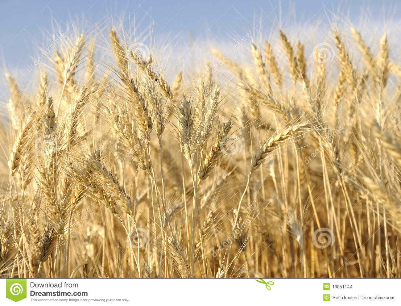 wheat business plan