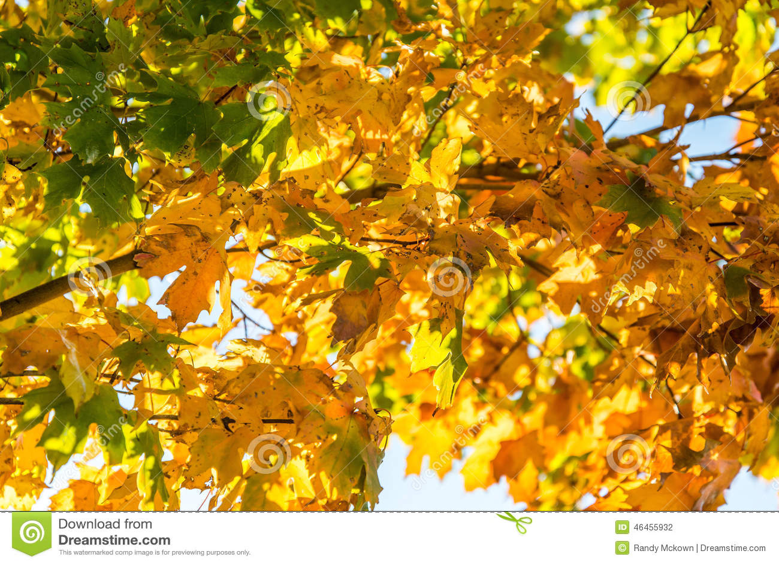 autumn fall tree backgrounds - photo #31