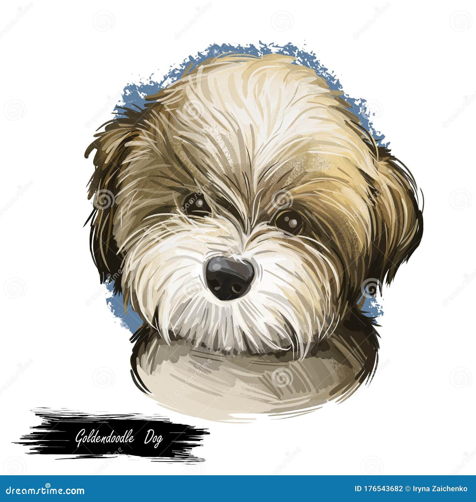 Goldendoodle Dog Stock Illustrations 61 Goldendoodle Dog Stock Illustrations Vectors Clipart Dreamstime
