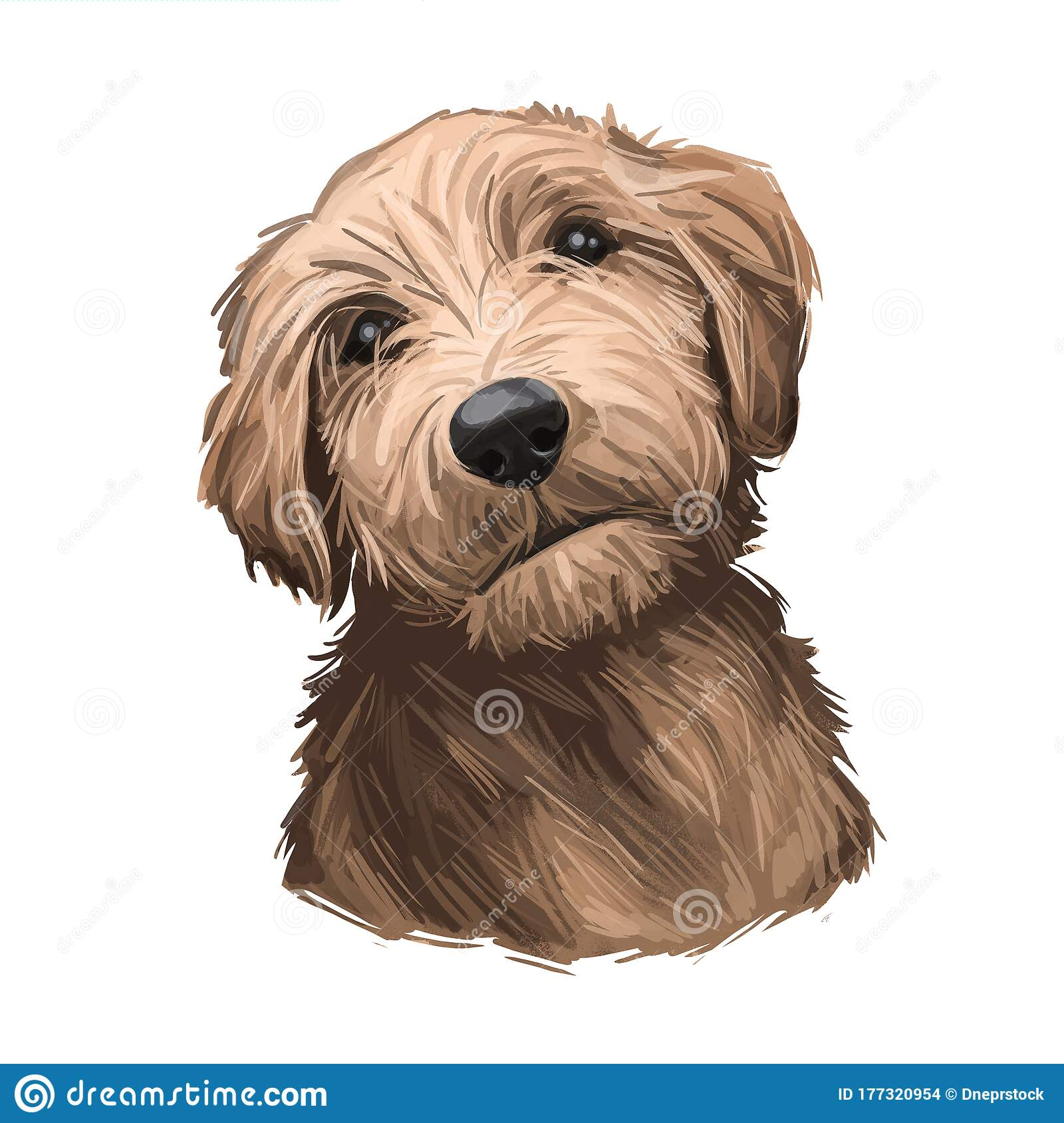 Goldendoodle Puppy Cross Breed Of Golden Retriever And Poodle Isolated On White Digital Art Illustration Of Hand Drawn Cute Home Stock Illustration Illustration Of Goldendoodle Hand 177320954