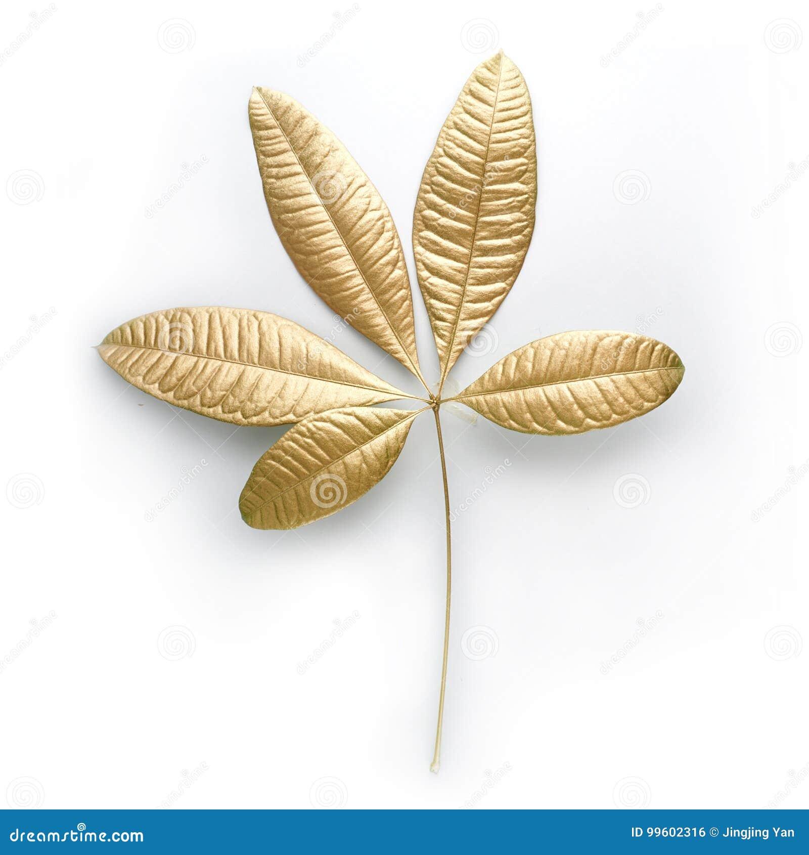 Goldene Blattgestaltungselemente Dekorationselemente für Einladung, Hochzeitskarten, Valentinsgrußtag, Grußkarten Lokalisiert auf