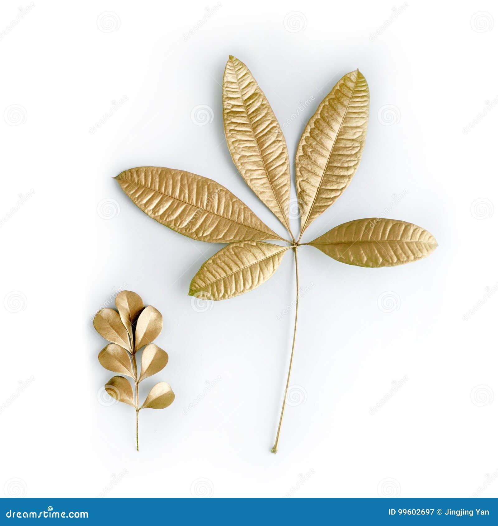 Goldene Blattgestaltungselemente Dekorationselemente Fur Einladung