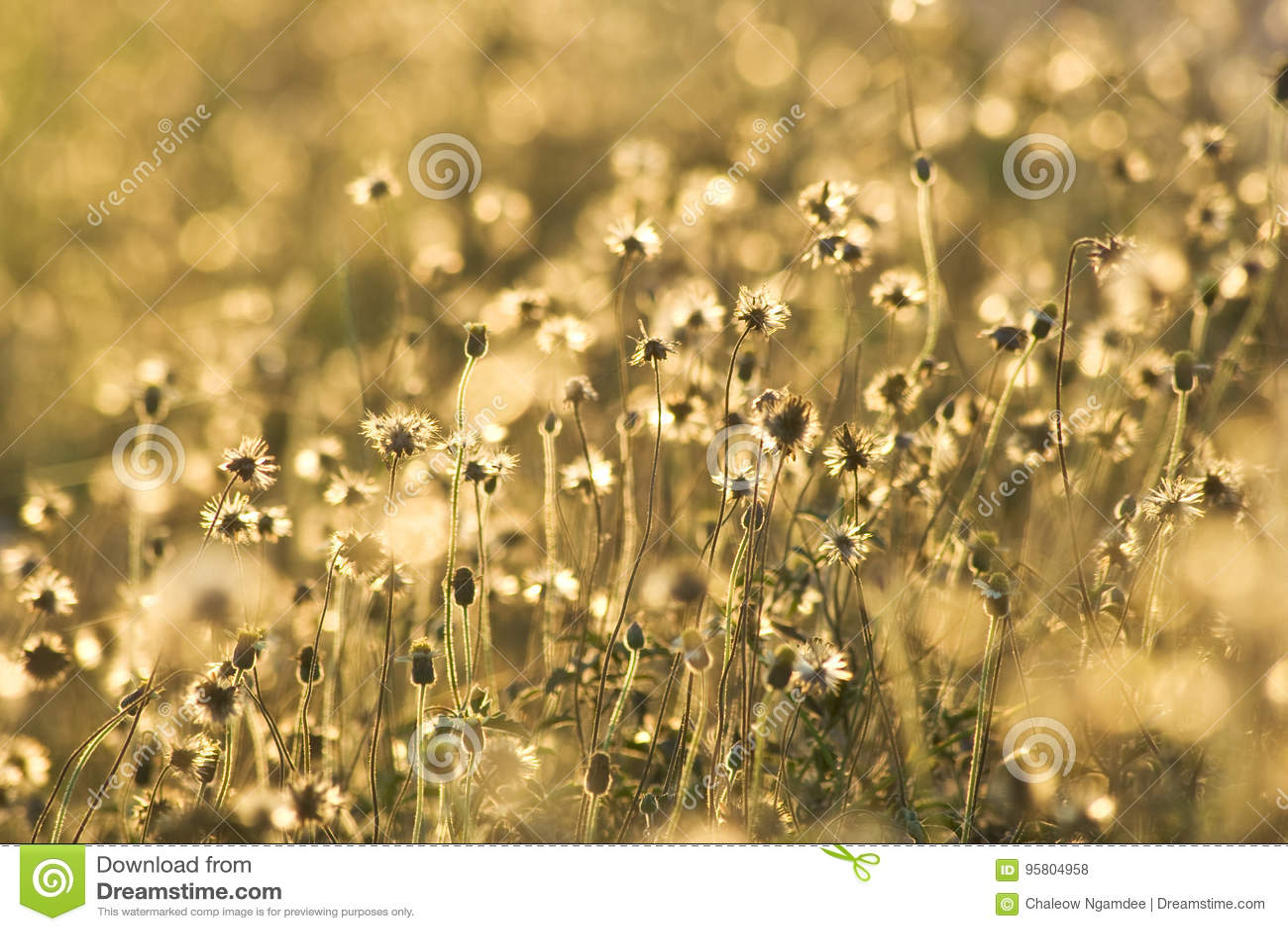 Goldene Grasblumen