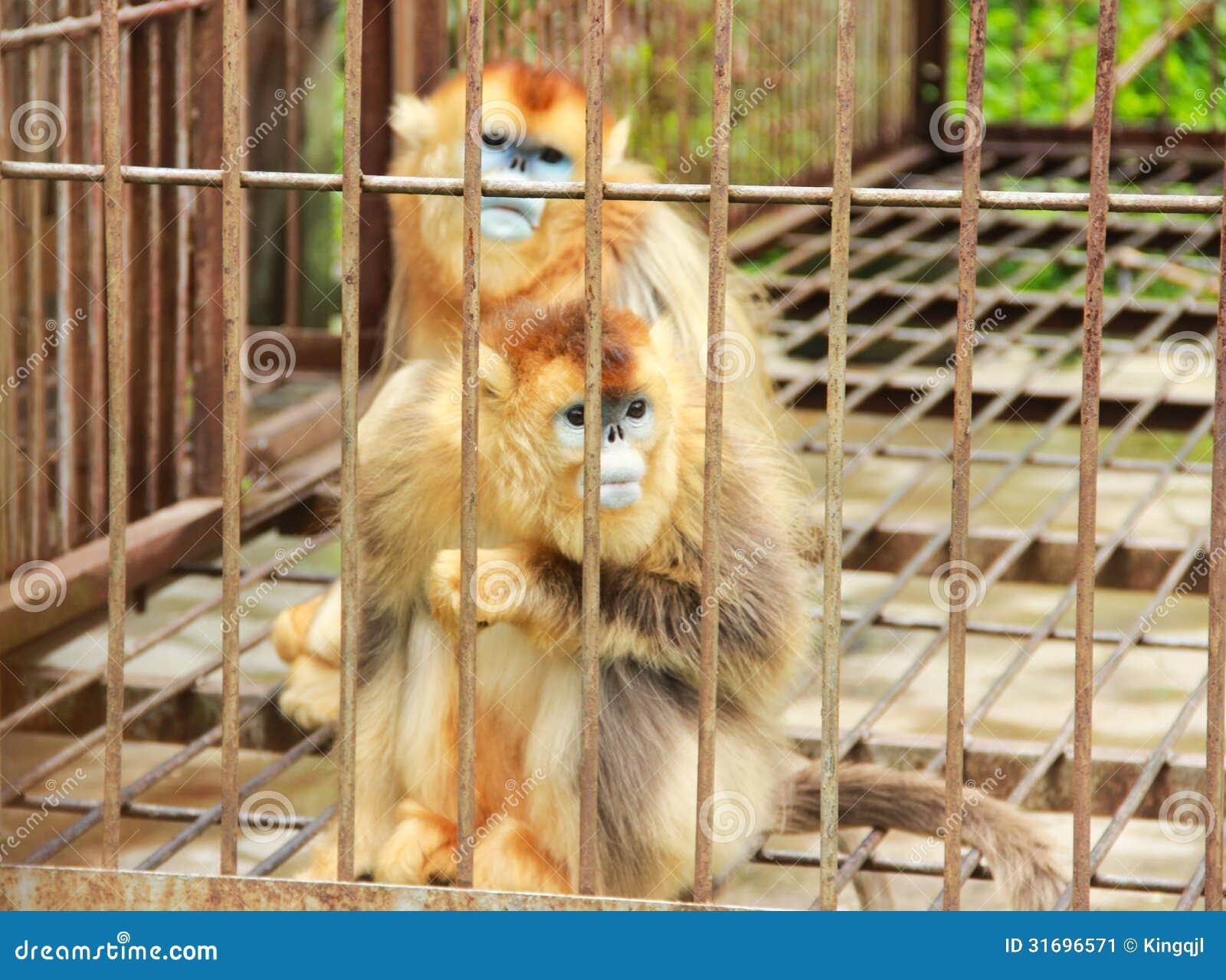 Erstaunlich Haustier Affe Ideen Von P