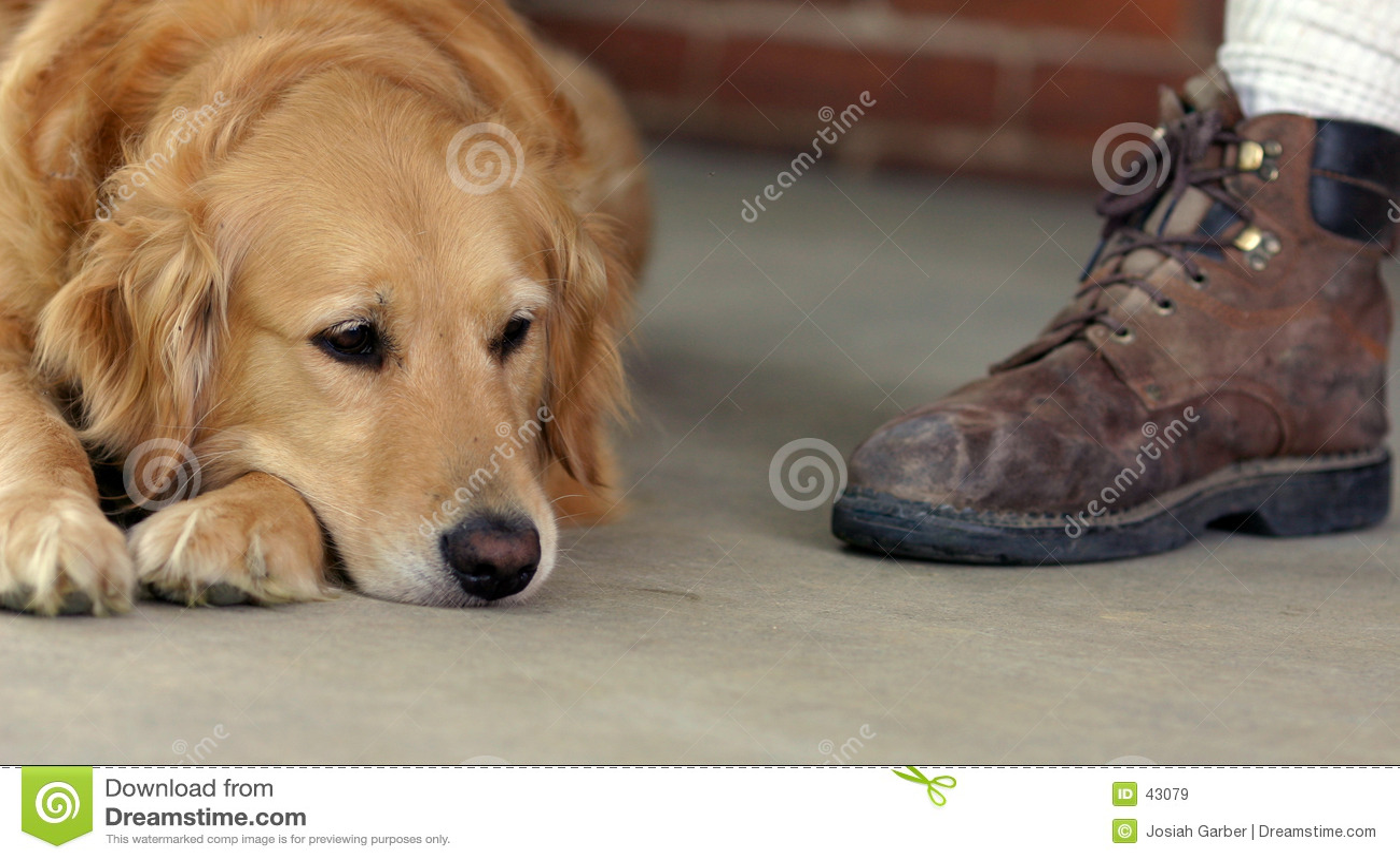 Goldener Apportierhund und Matte