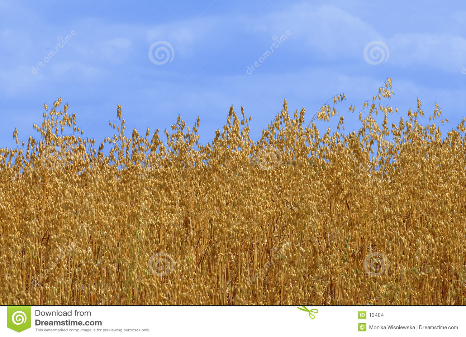 Goldener Hafer