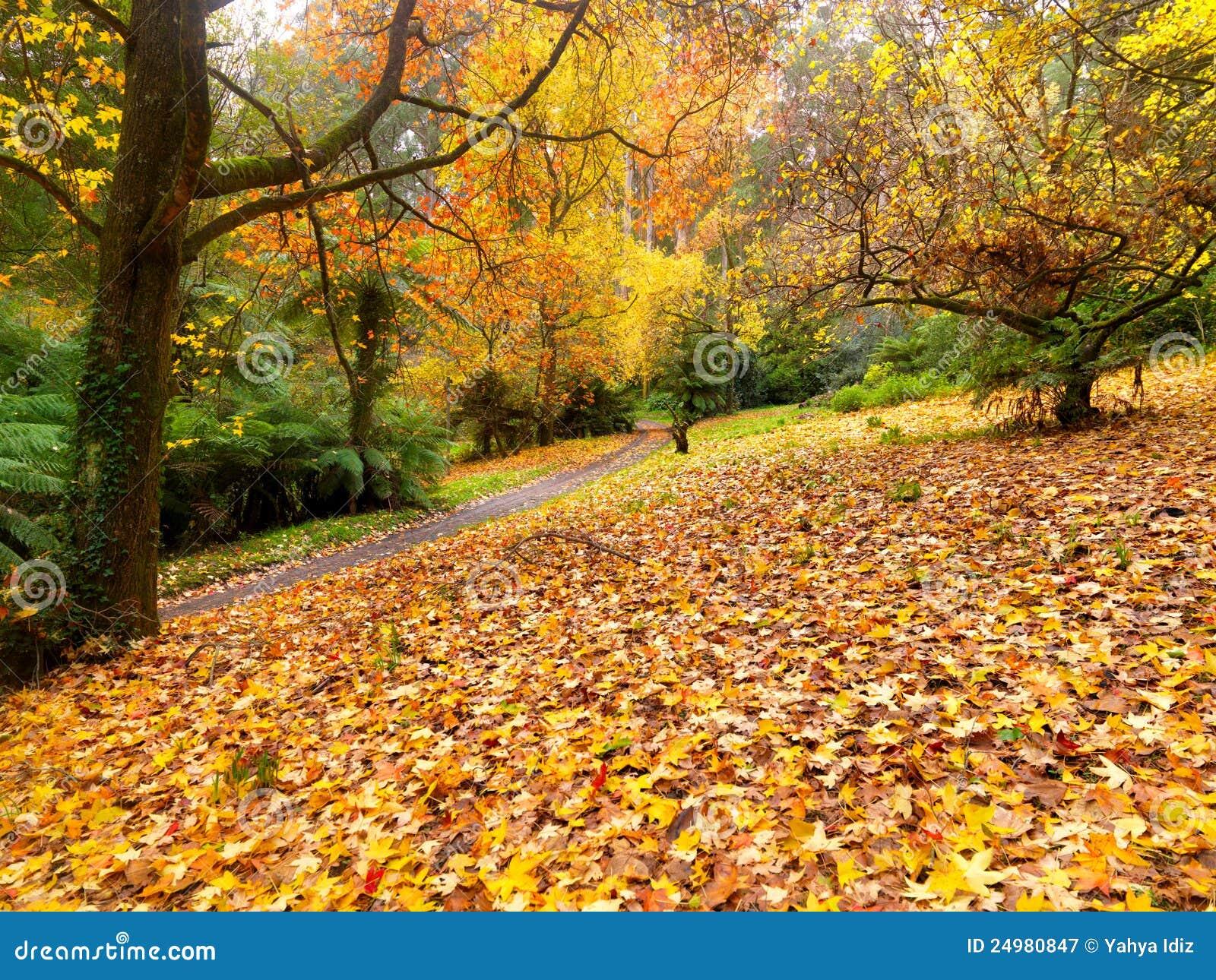 Goldener Herbstgarten