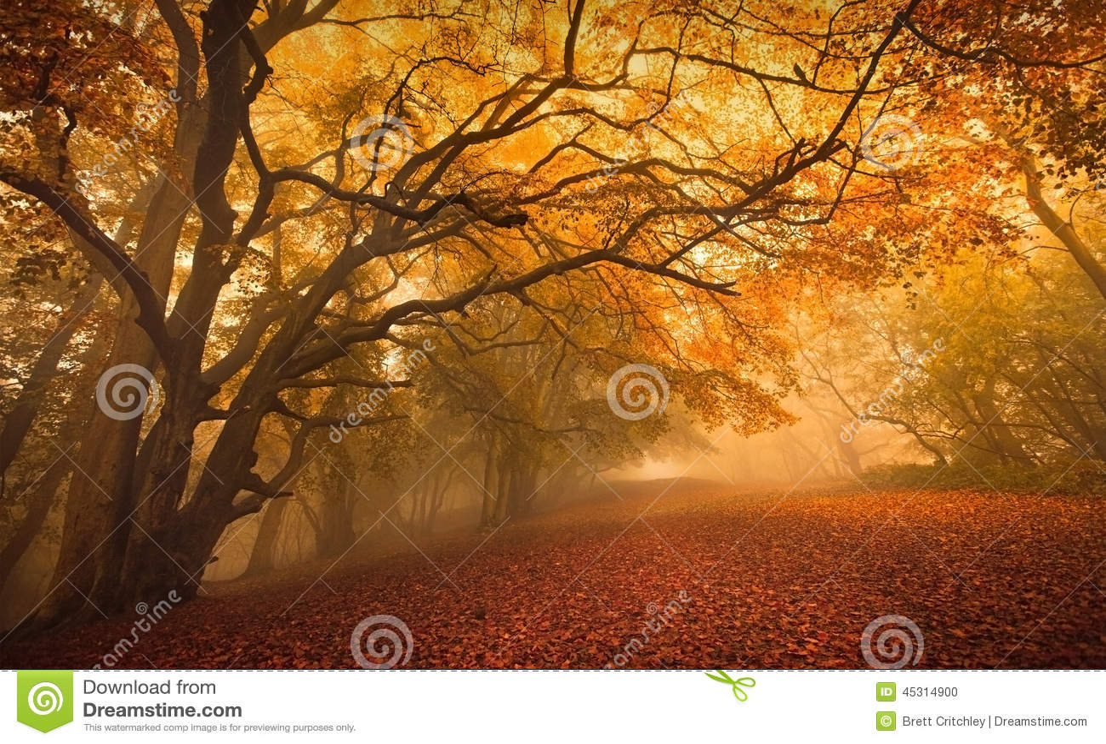 Goldener Herbstsaisonwald
