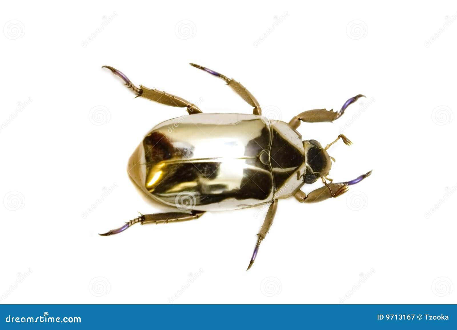 Kleine Gelbe Käfer : goldener k fer lizenzfreie stockfotografie bild 9713167 ~ Lizthompson.info Haus und Dekorationen