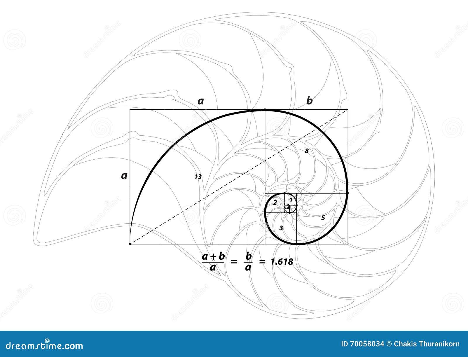 goldener schnitt und oberteil zeichnen auf wei vektor vektor abbildung bild 70058034. Black Bedroom Furniture Sets. Home Design Ideas