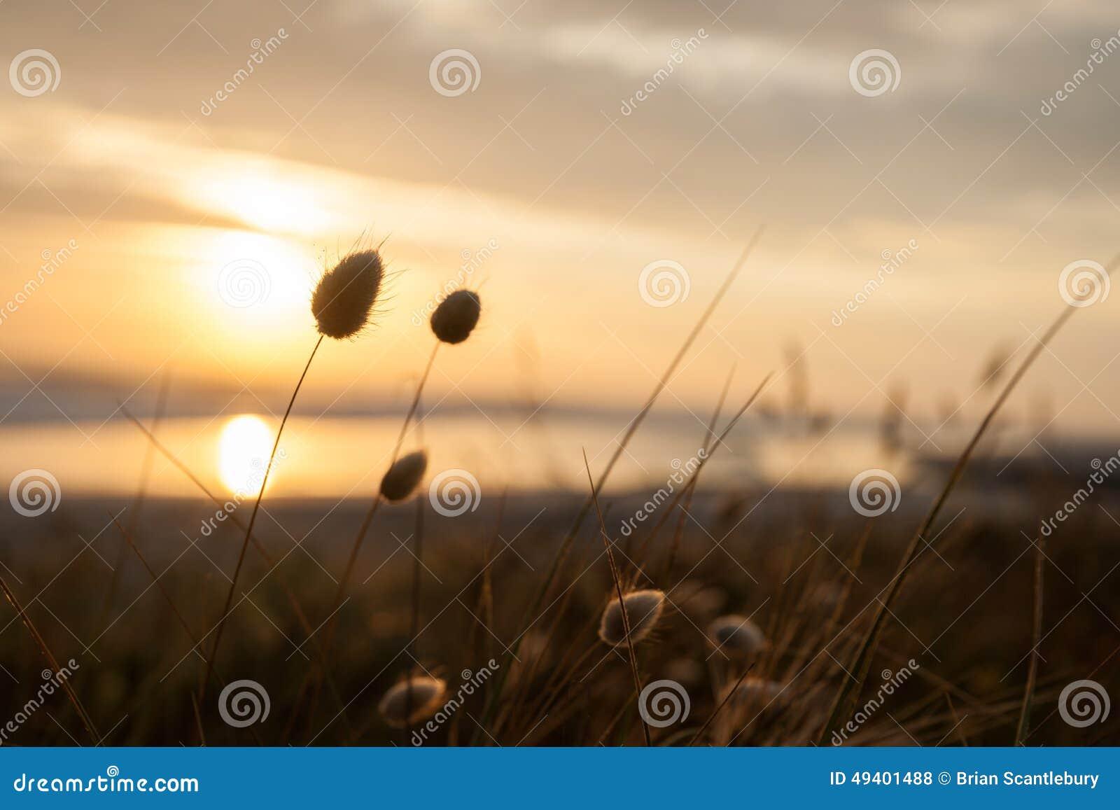 Download Goldener Sonnenaufgang stockfoto. Bild von himmel, meer - 49401488
