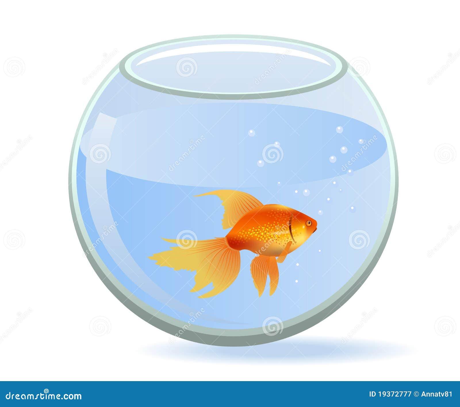 Goldfische im aquarium lizenzfreie stockfotografie bild for Goldfische im aquarium