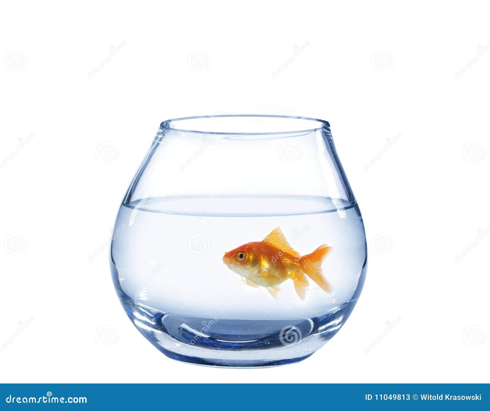 Goldfische im glasaquarium stockbild bild von float for Goldfische im aquarium