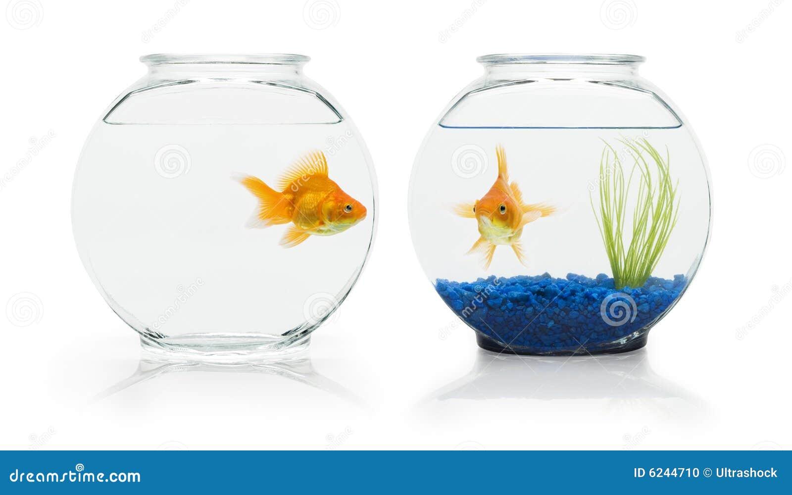 Goldfish βιότοποι