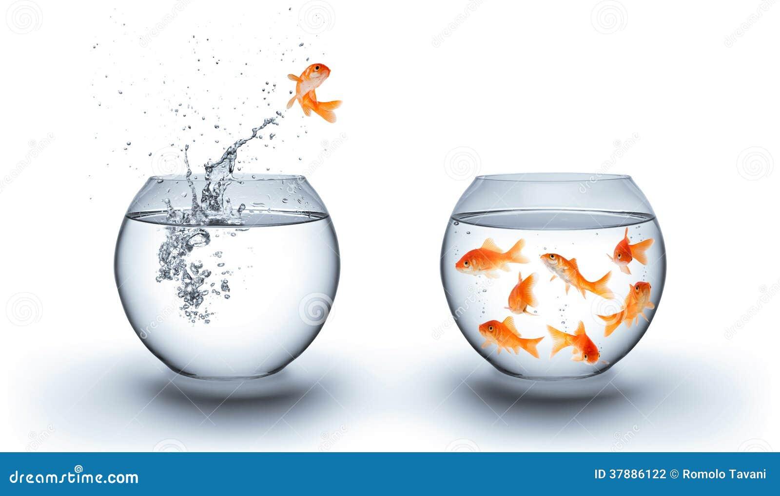 Goldfish που πηδά από το νερό - έννοια ομάδων