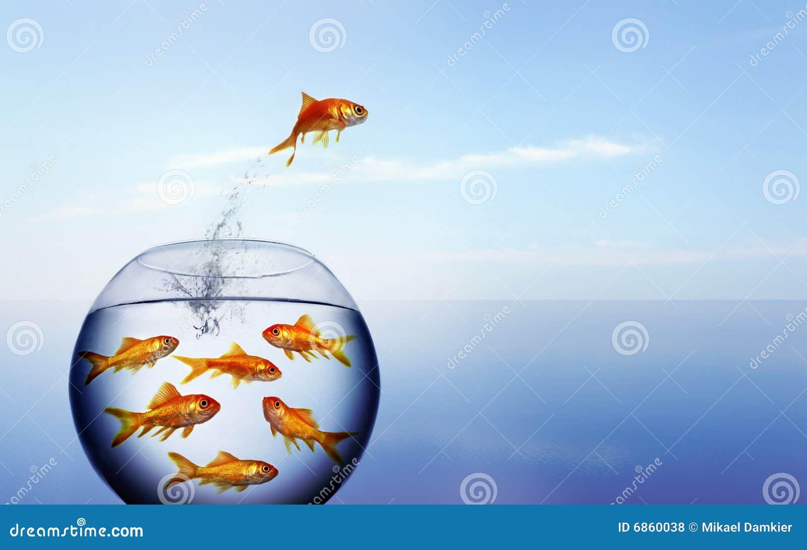 Goldfish скача вне вода