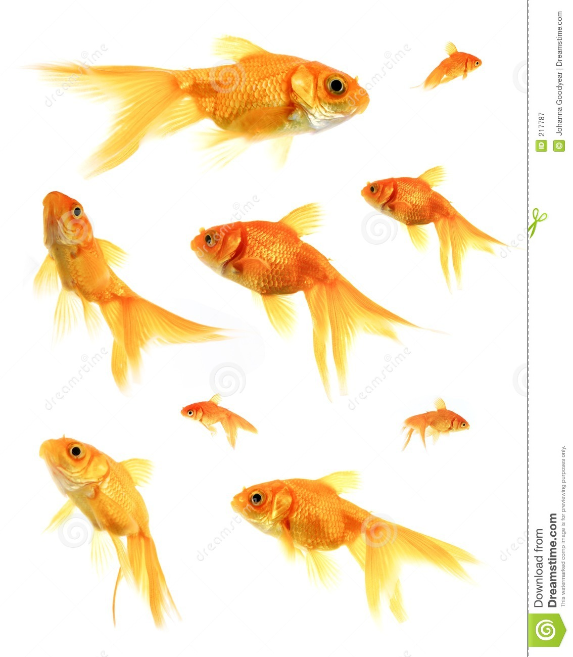 Goldfish Royalty Free Stock Photography - Image: 217787