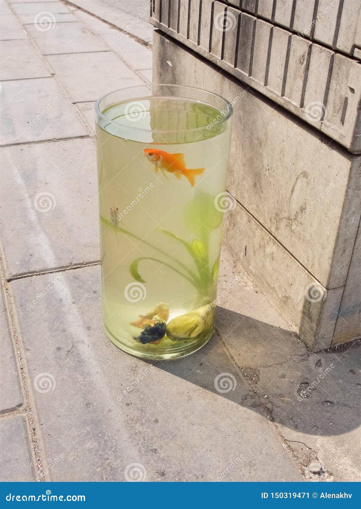 Goldfish in an aquarium standing on the sidewalk in the street