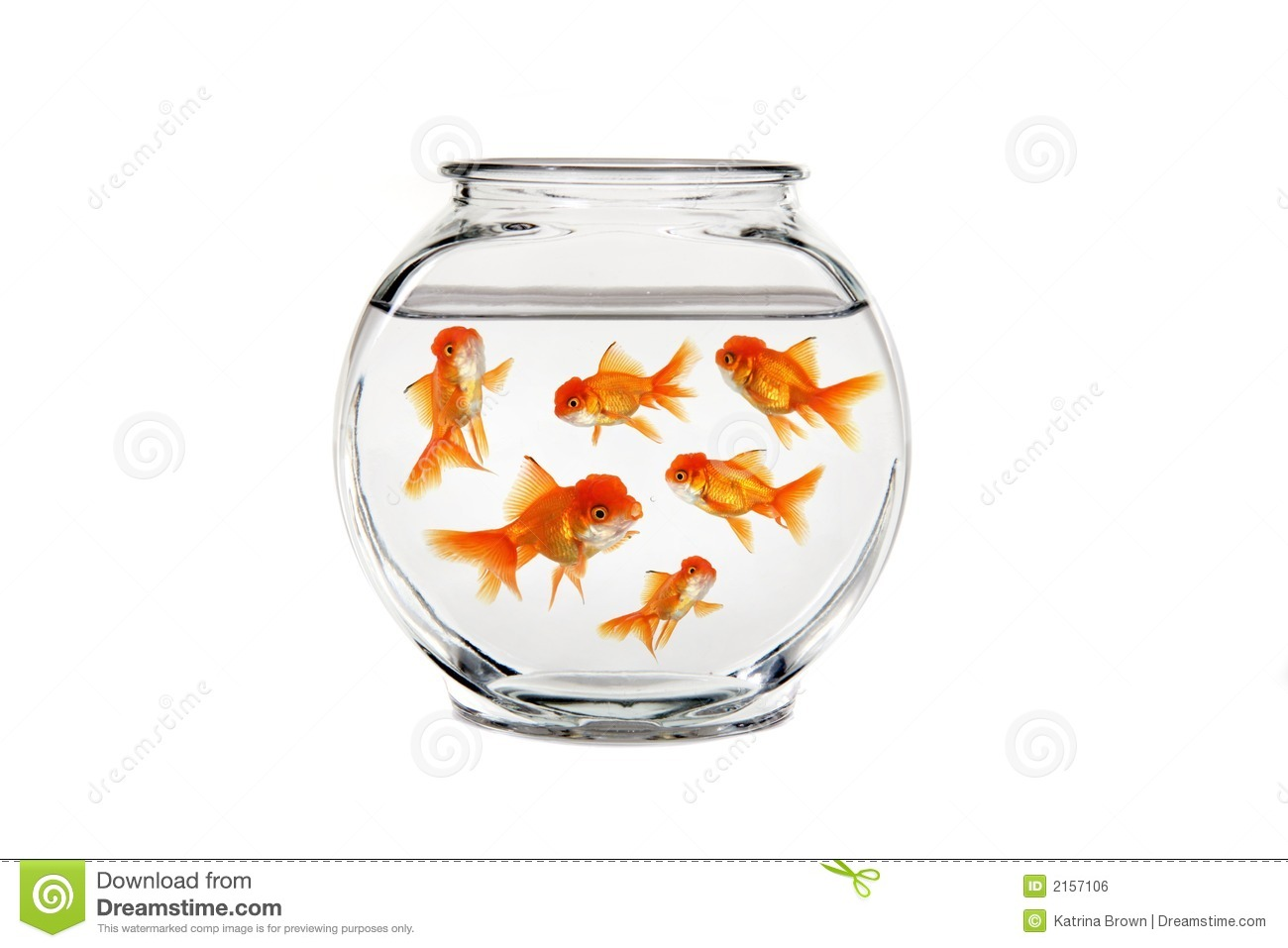 Goldfish bowl stock photo image of image escape freedom for How to make a fish bowl