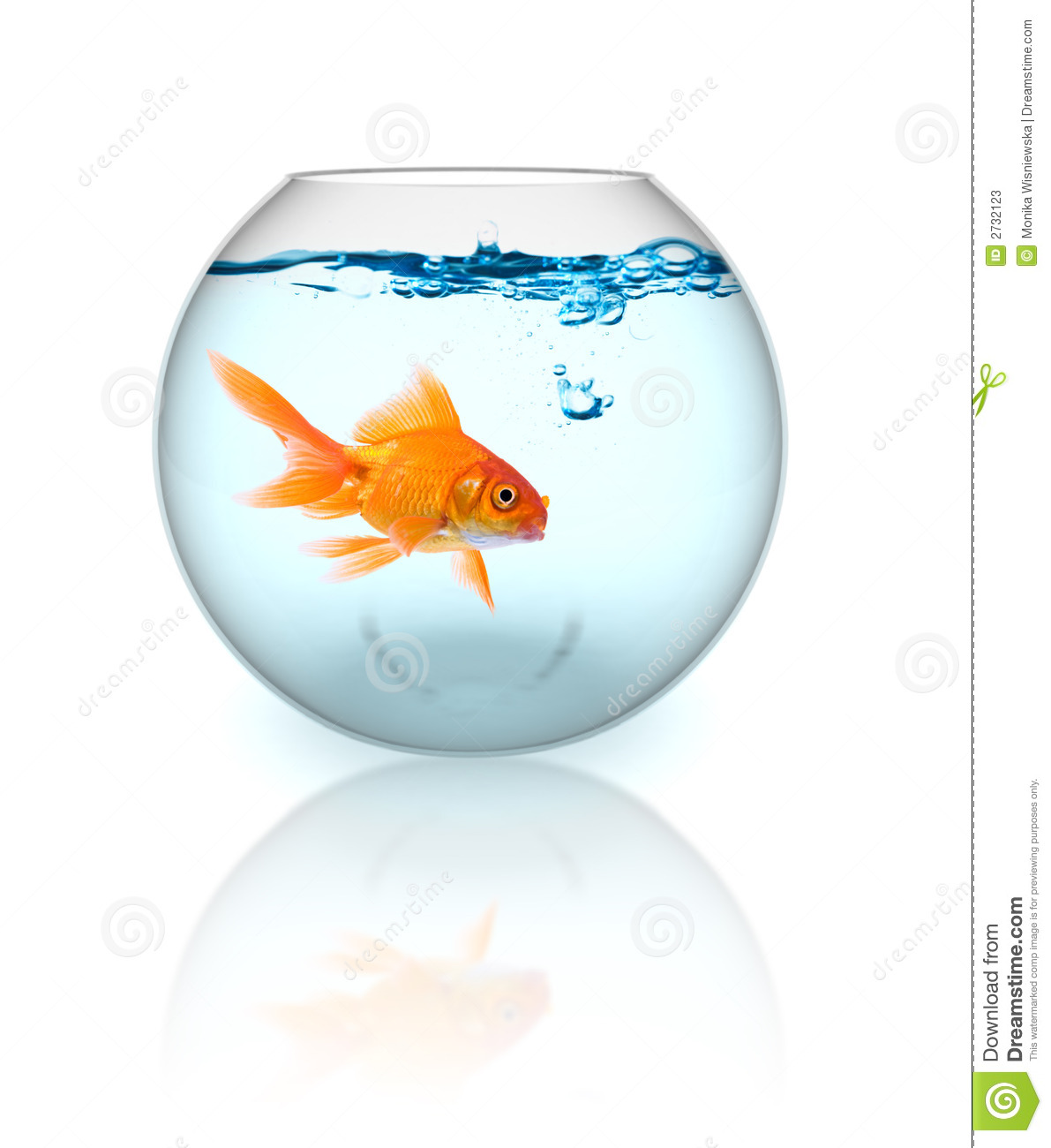 Goldfish in a bowl - photo#28