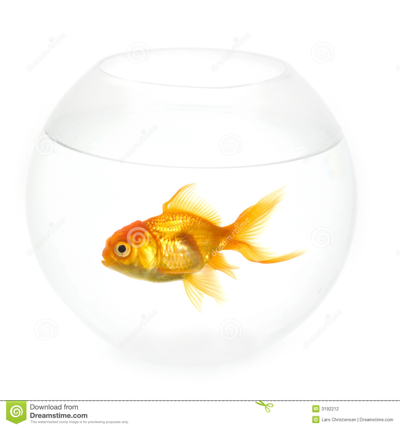 Goldfish in a bowl - photo#20