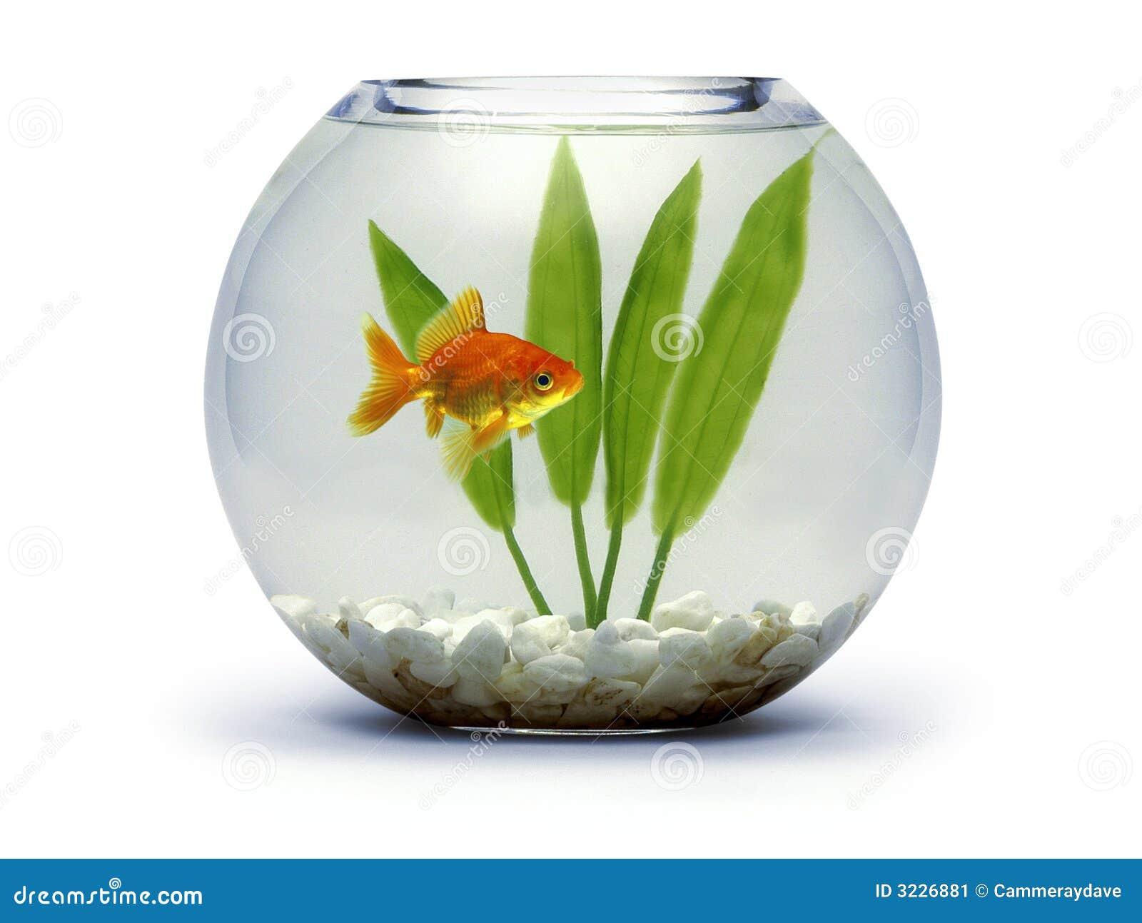 Goldfish Bowl Stock Images - Download 2,484 Photos
