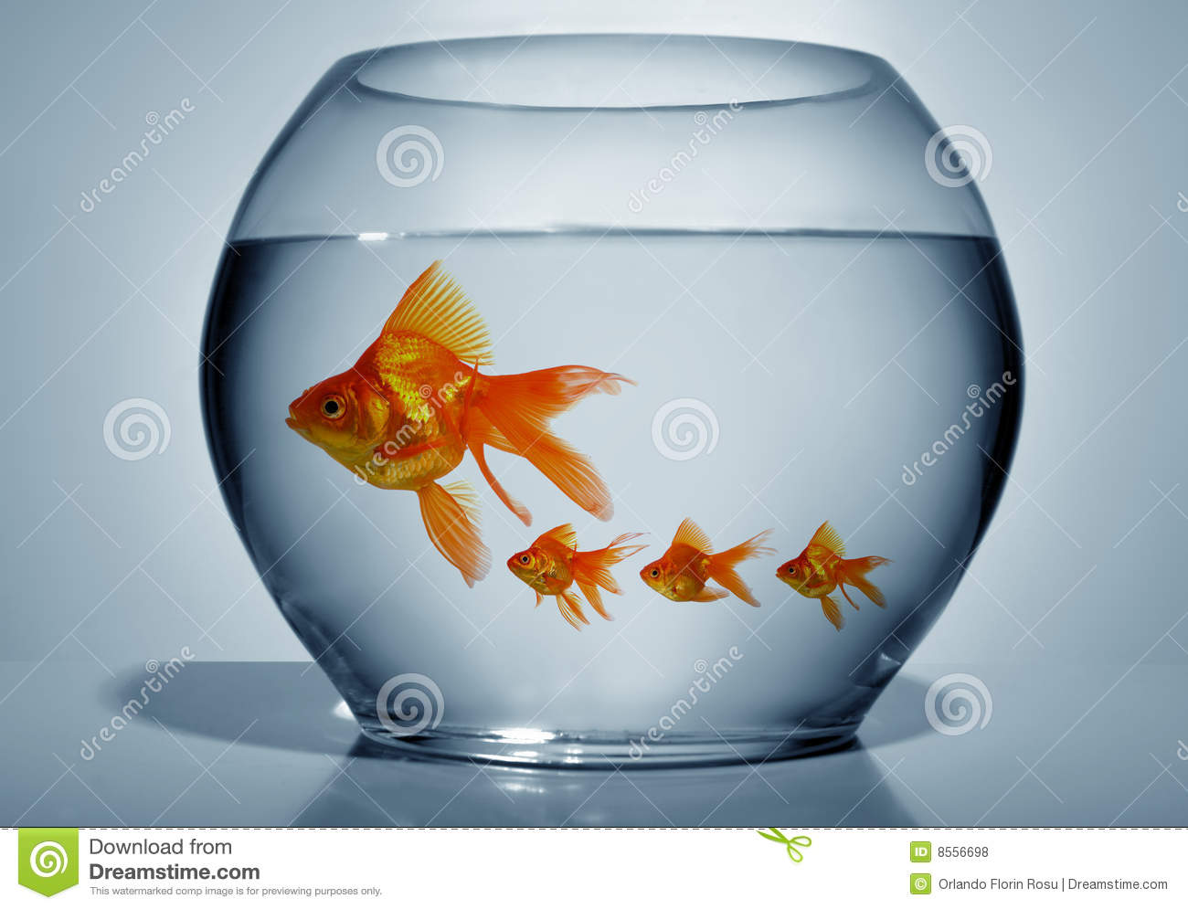 Goldfish In Bowl Royalty Free Stock Photos - Image: 8556698