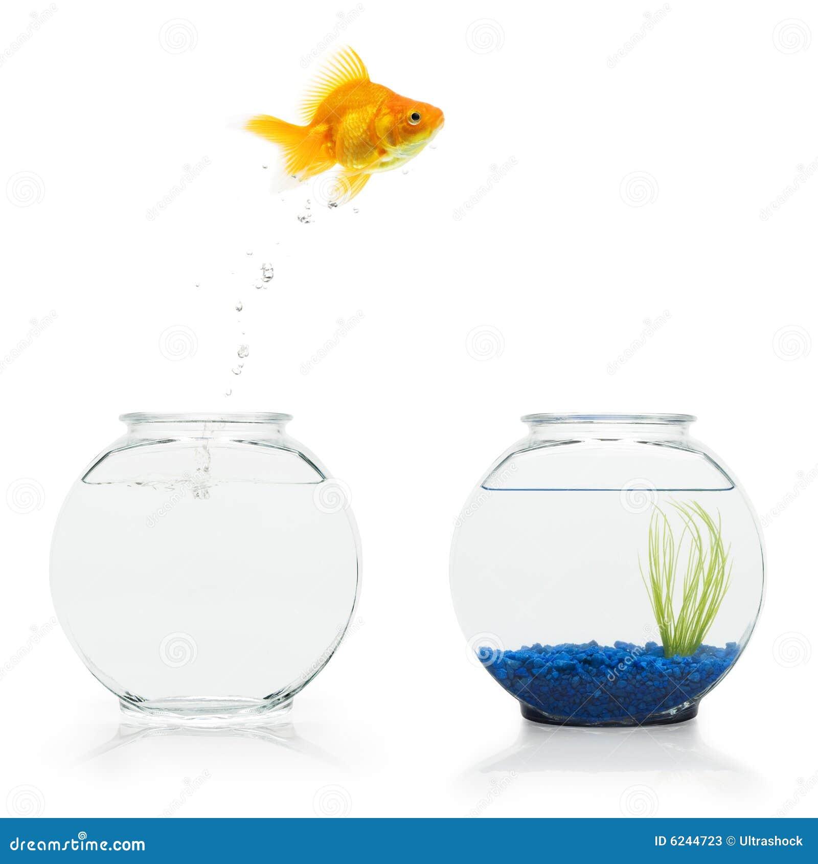 Goldfish-Entweichen