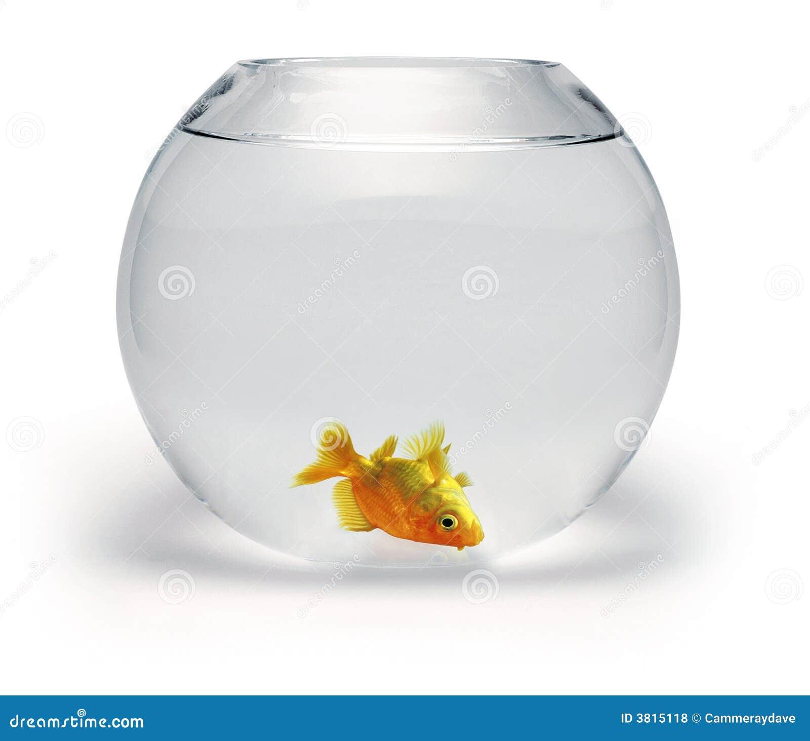 Goldfish guasto