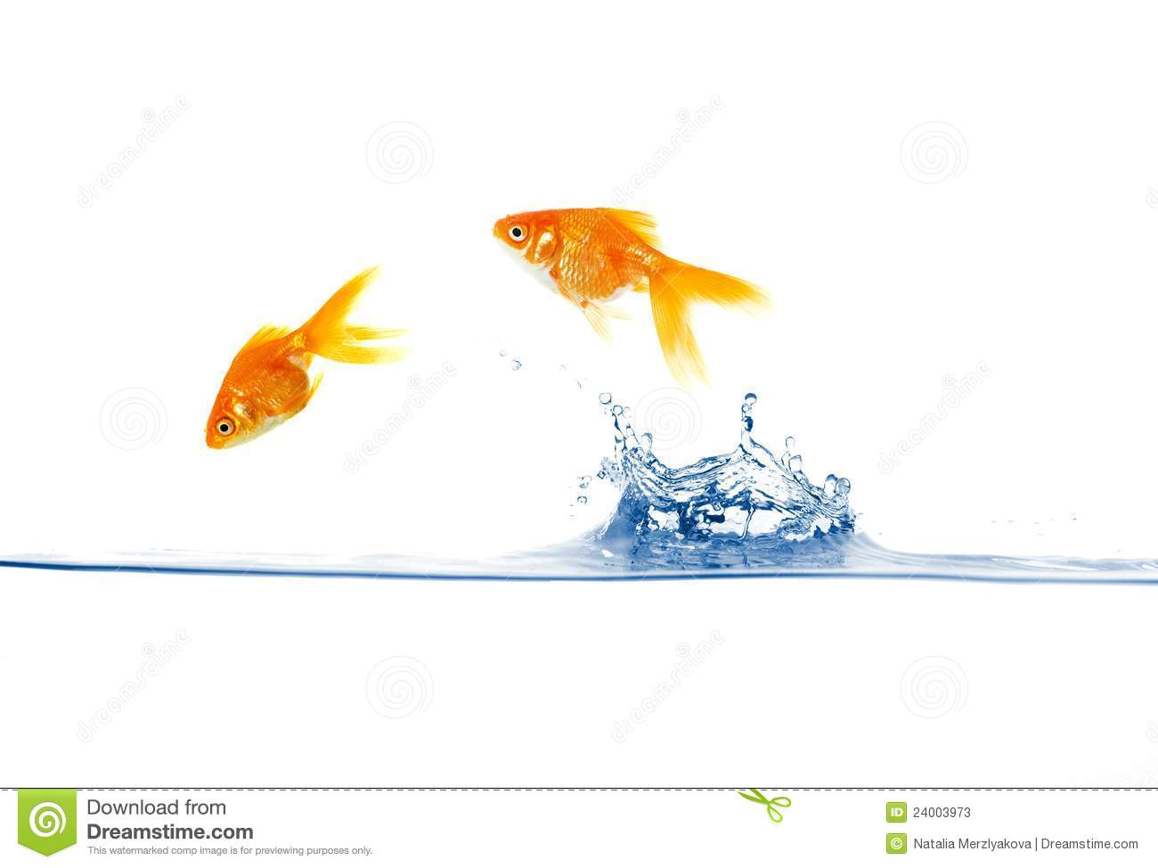 Goldfish jumping stock image image of escape underwater for Dream about fish out of water