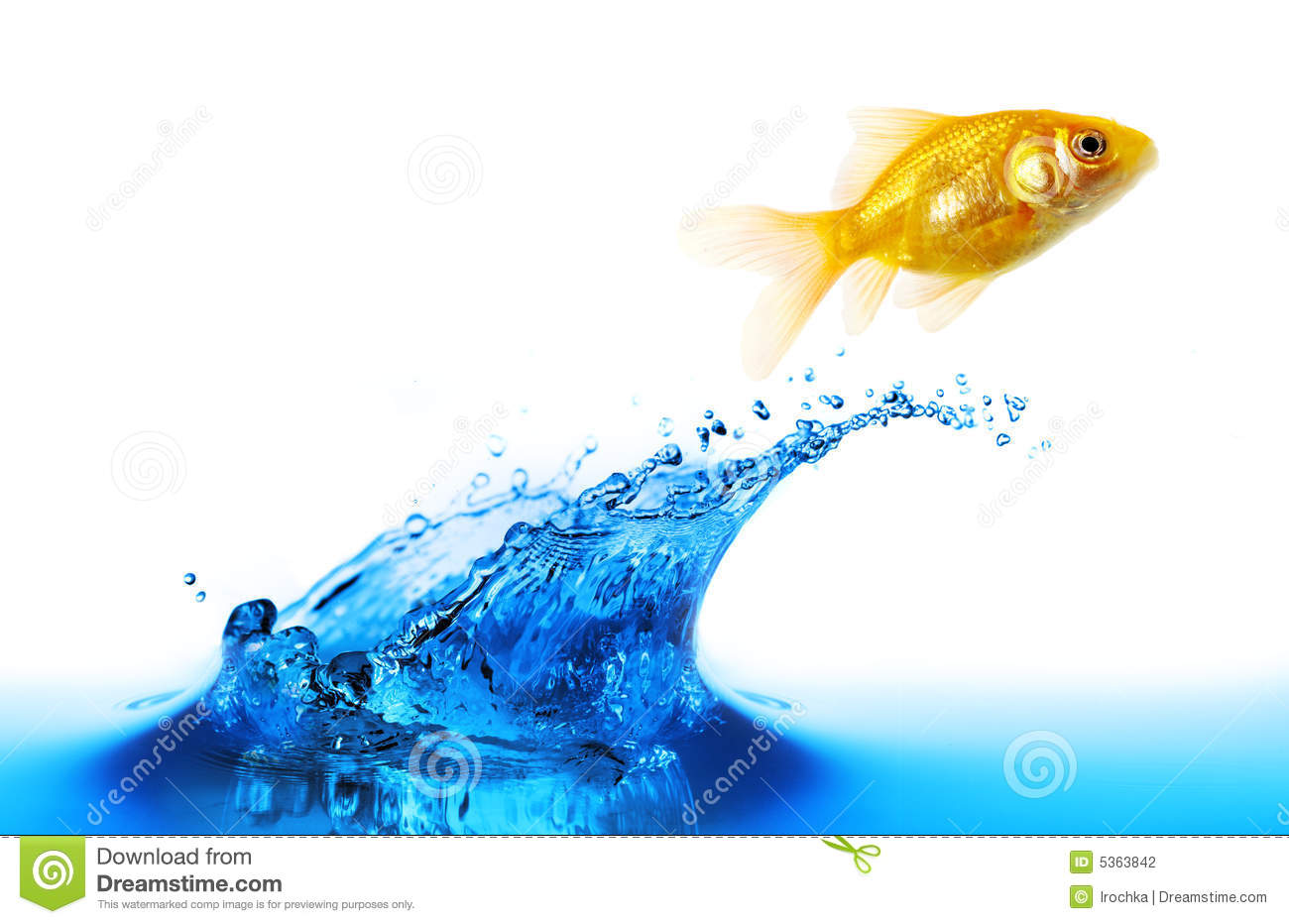 Goldfish jumping stock photo image of life golden wave for Idaho out of state fishing license