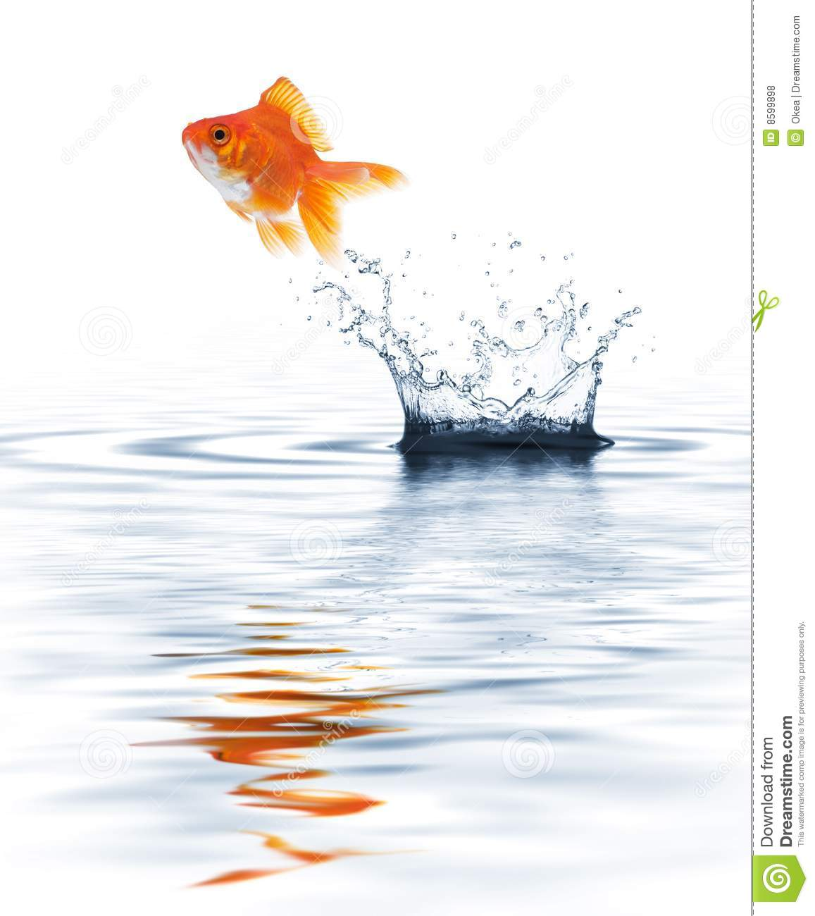how to train goldfish to jump