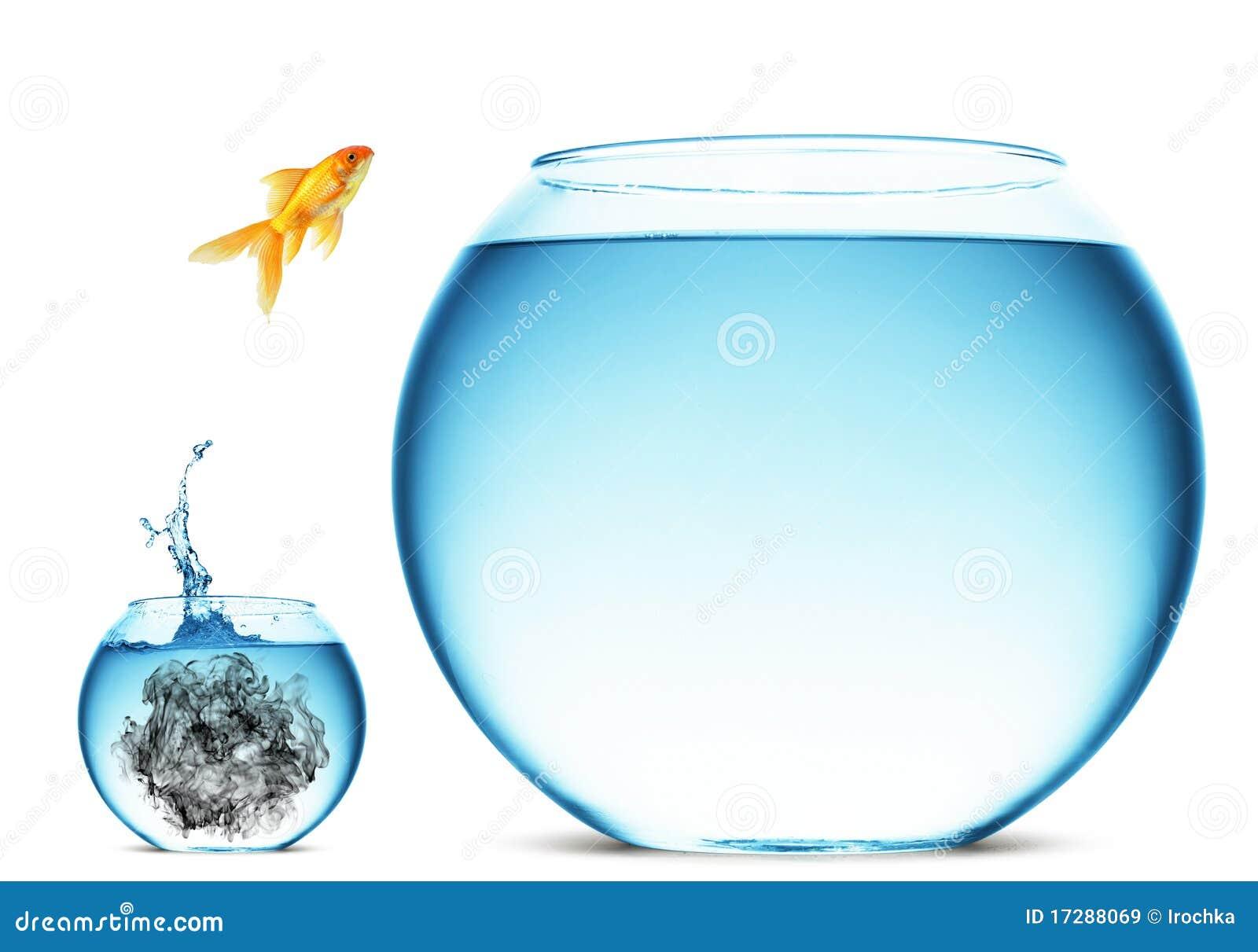 Super Bowl 2015 Goldfish-jumping-large-bowl-17288069