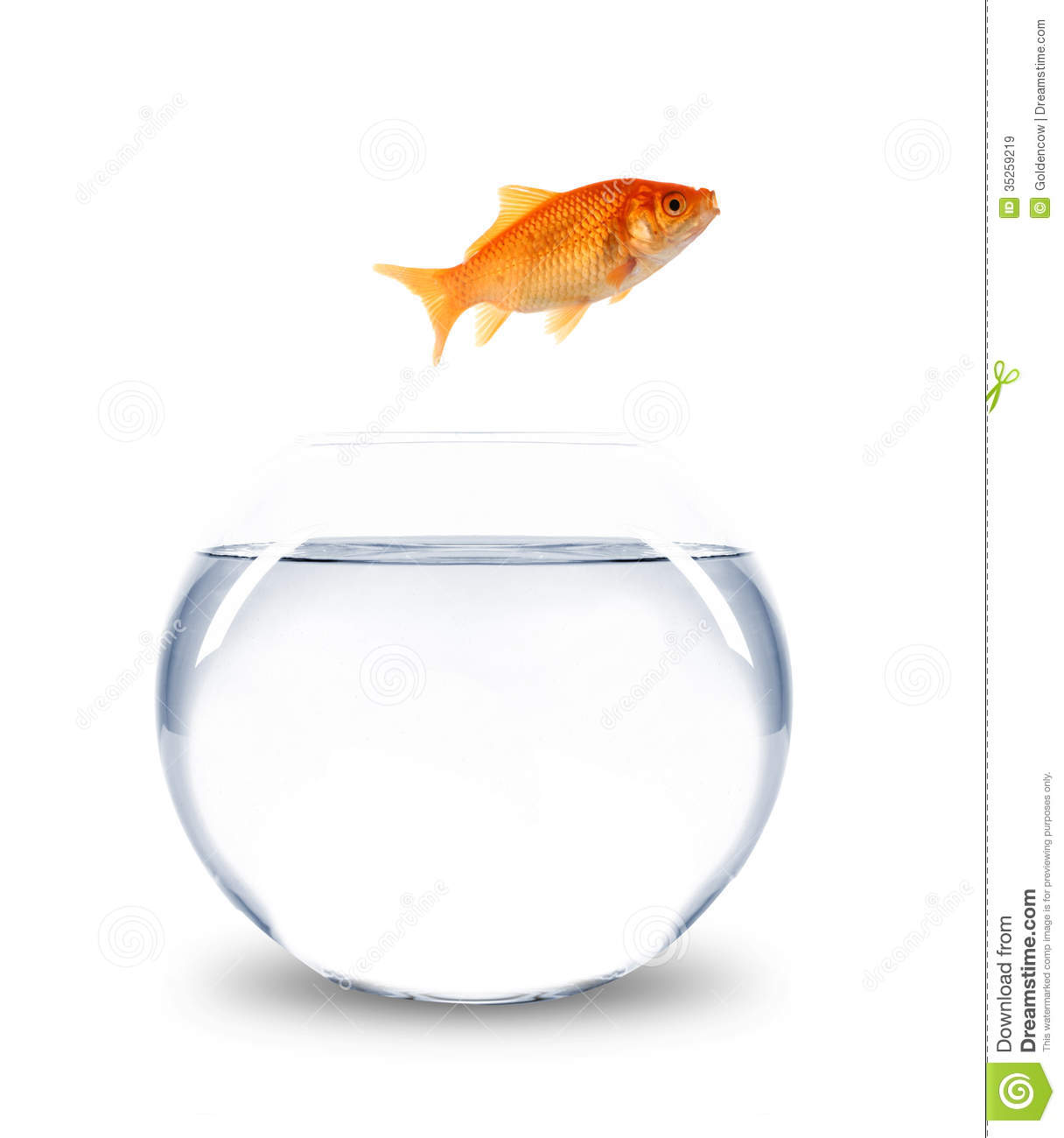 Goldfish Jumping Out Of Bowl Royalty Free Stock Images - Image ...
