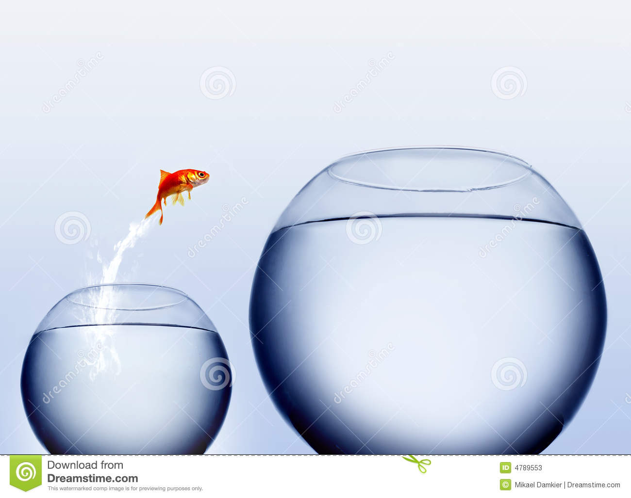 Goldfish Jumping Out Of The Water Stock Photo 4789553 Megapixl