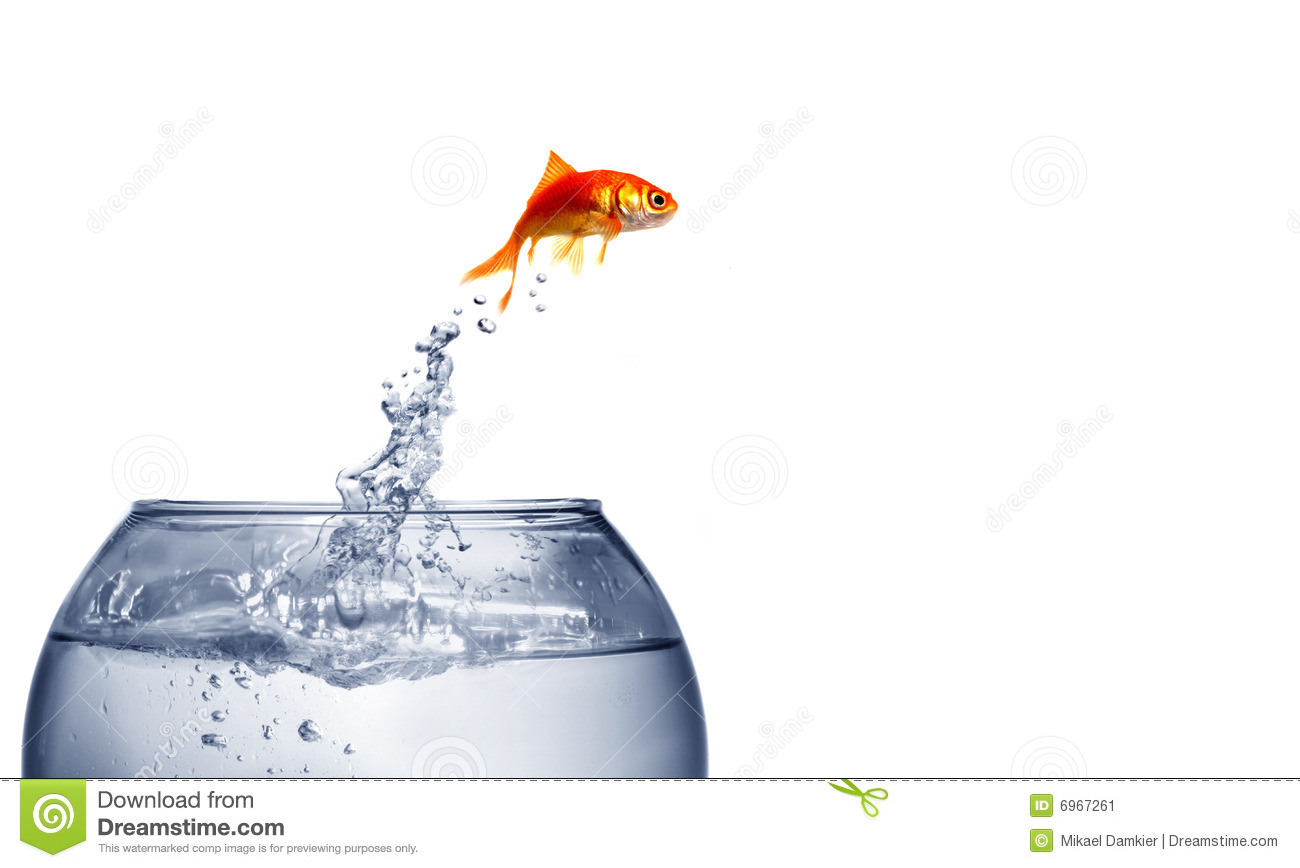 Goldfish jumping out of the water stock image image 6967261 for Dream about fish out of water