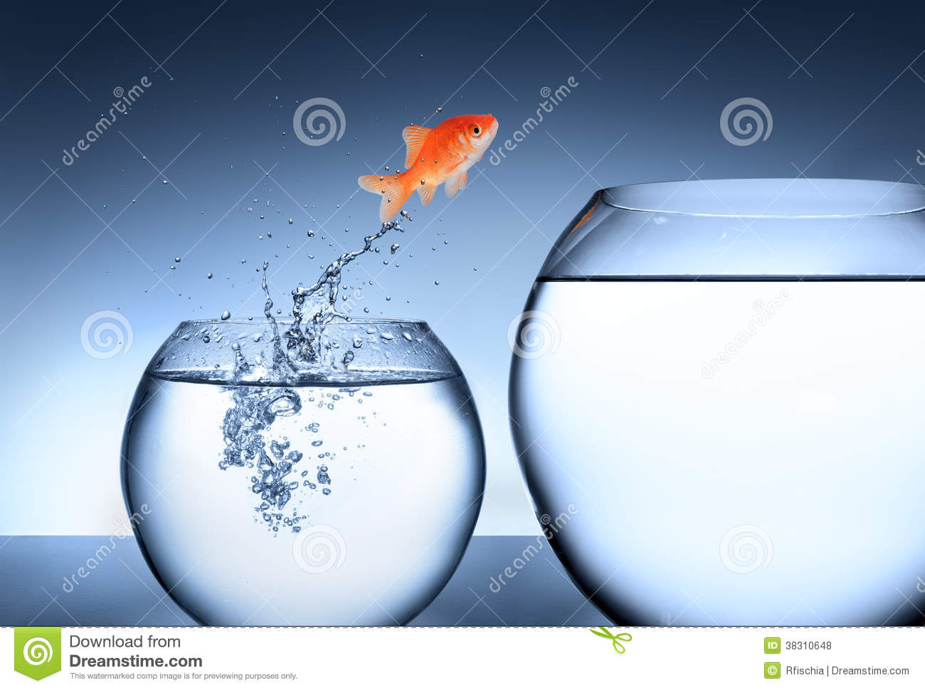 Goldfish jumping out of the water team concept royalty for Dream about fish out of water