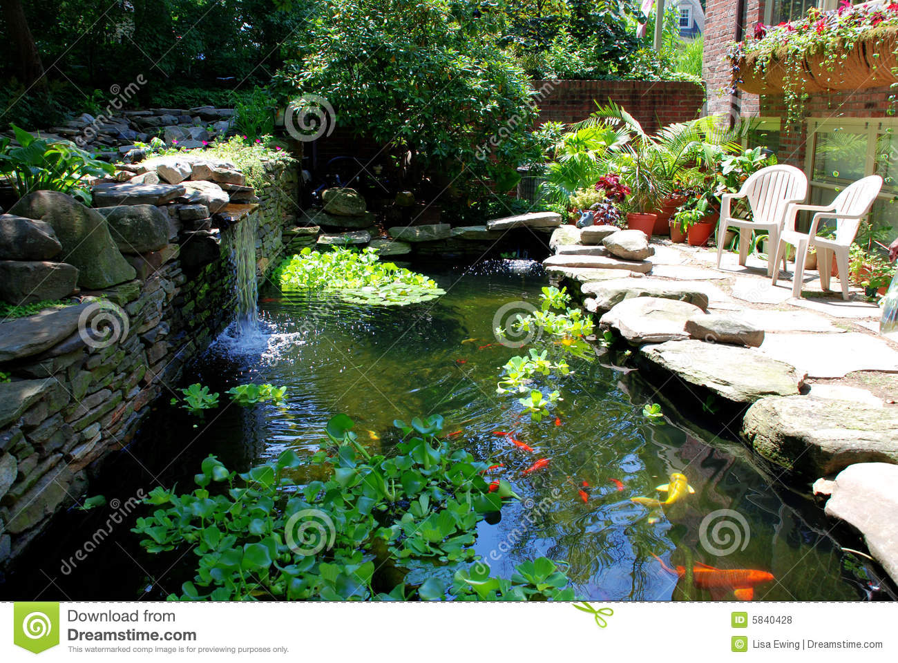 Goldfish and koi pond picture royalty free stock photos for Goldfish pond plants