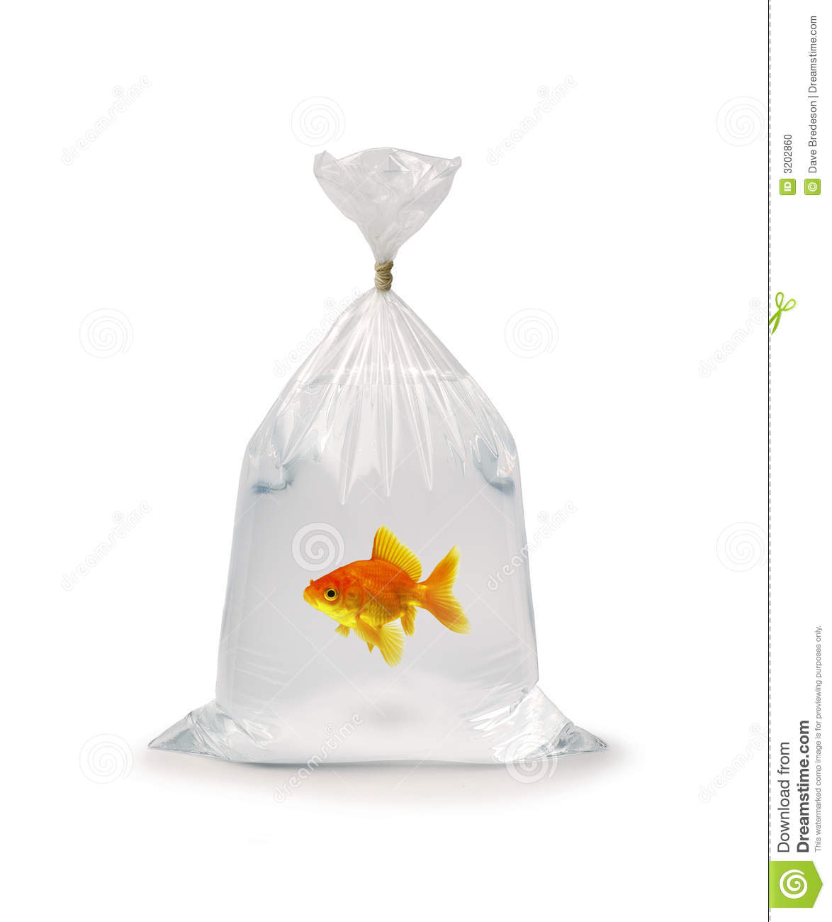 Goldfish in plastic bag stock photo image of home take for Fish in a bag