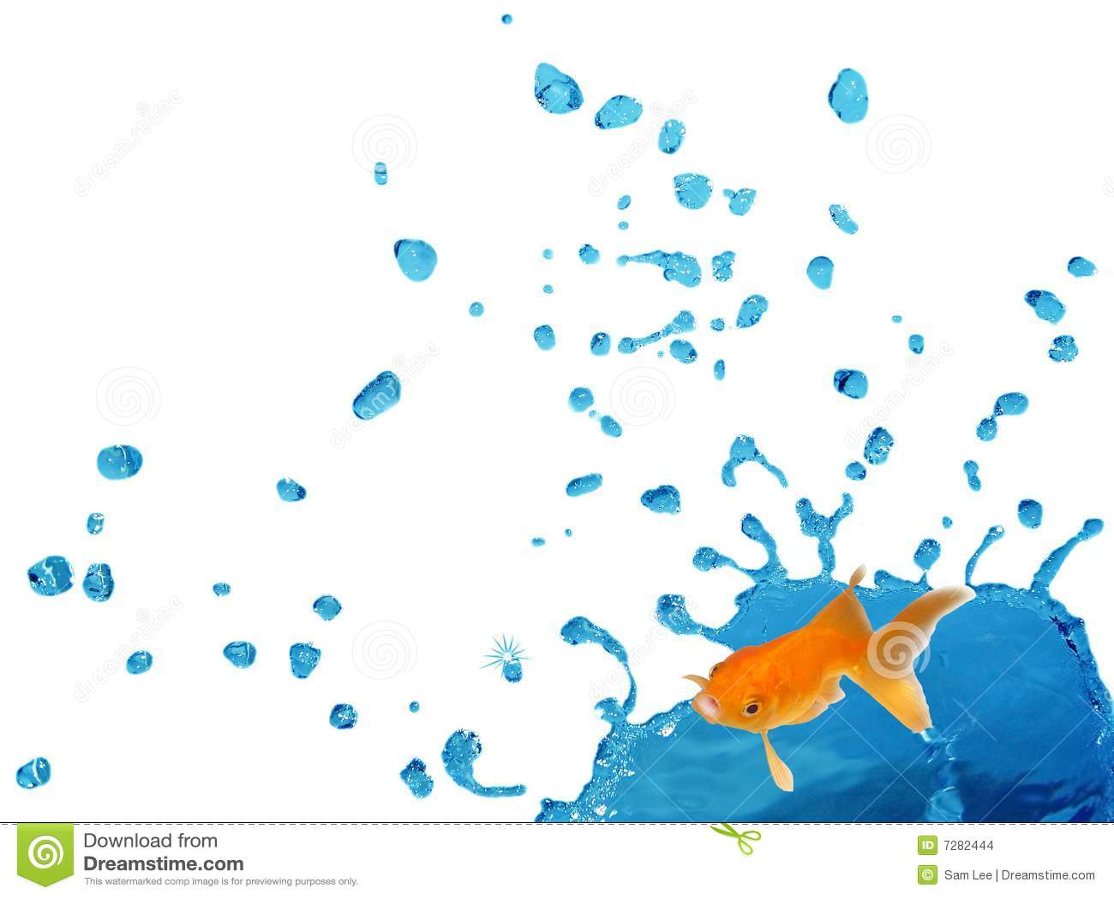 Goldfish que salpica en el líquido de Bule