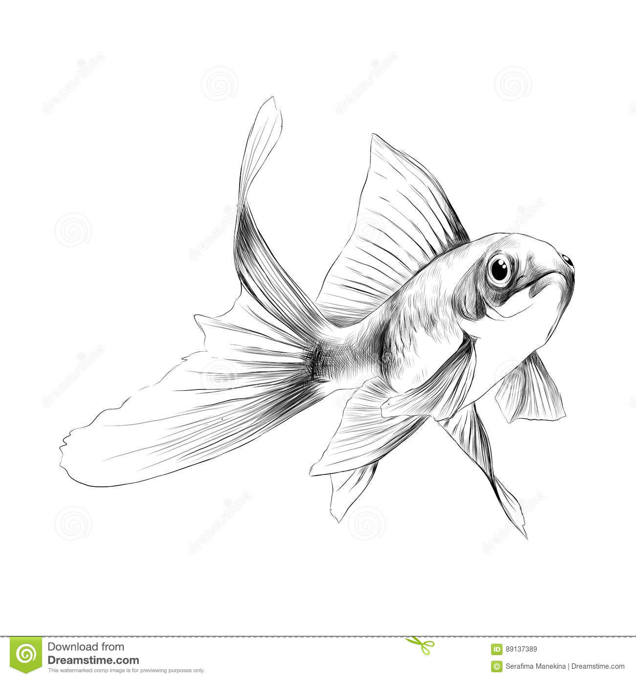 goldfish sketch vector graphics