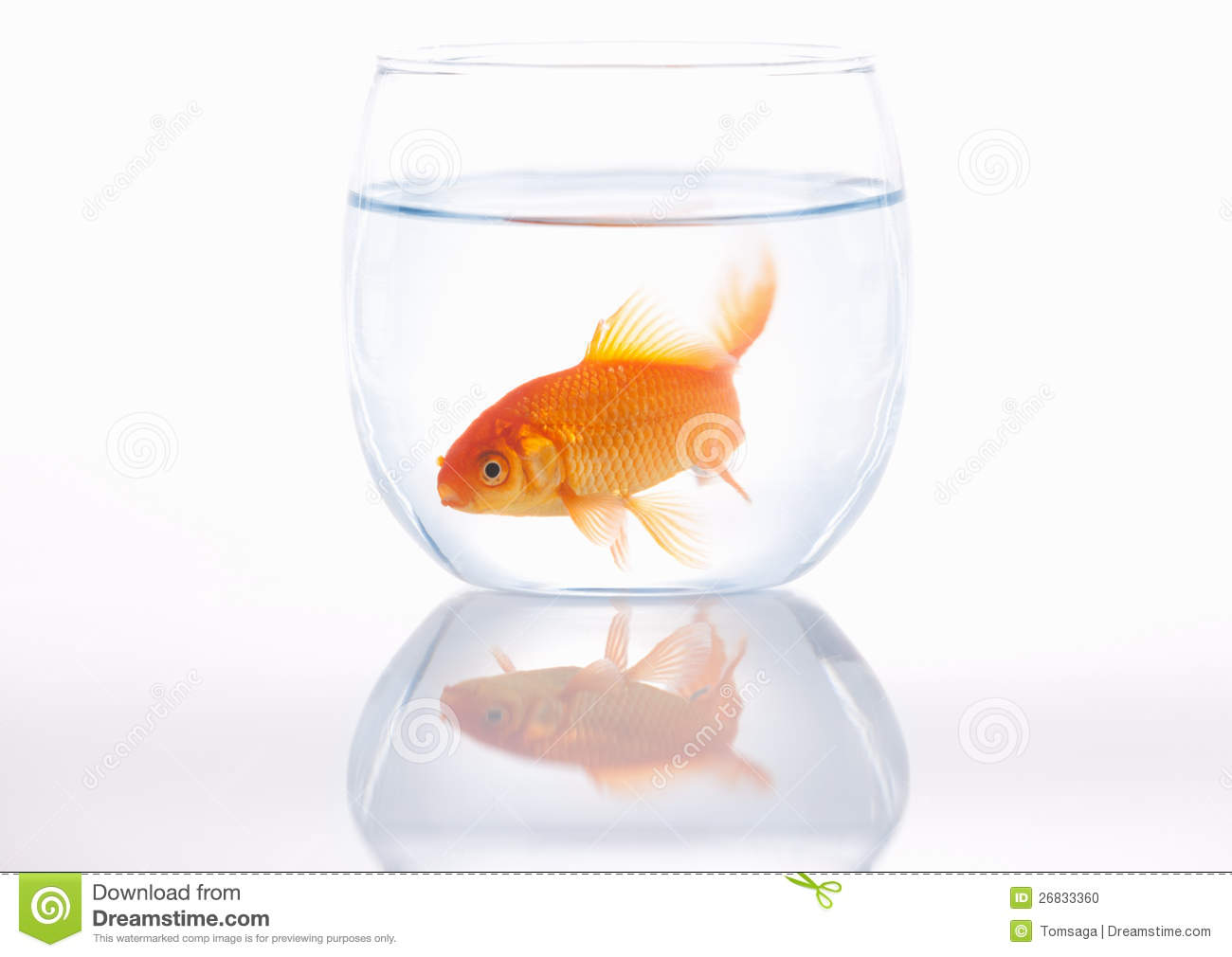 Goldfish in a small bowl stock photo image 26833360 for Small fish bowl